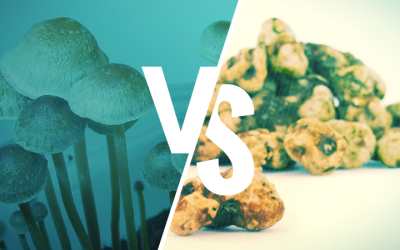 Psilocybin Truffles vs Mushrooms – What's the Difference?