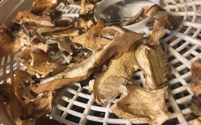 Buy Magic Mushroom Spores Online  (Warning! Read This First)
