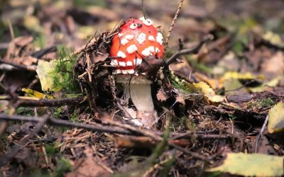 Where to Find Shrooms: Wild Foraging for Magic Mushrooms